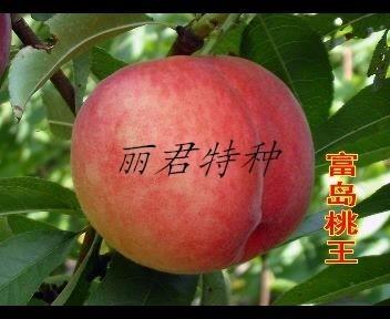 桃王|桃树|桃王苗木|桃树苗|桃树种植