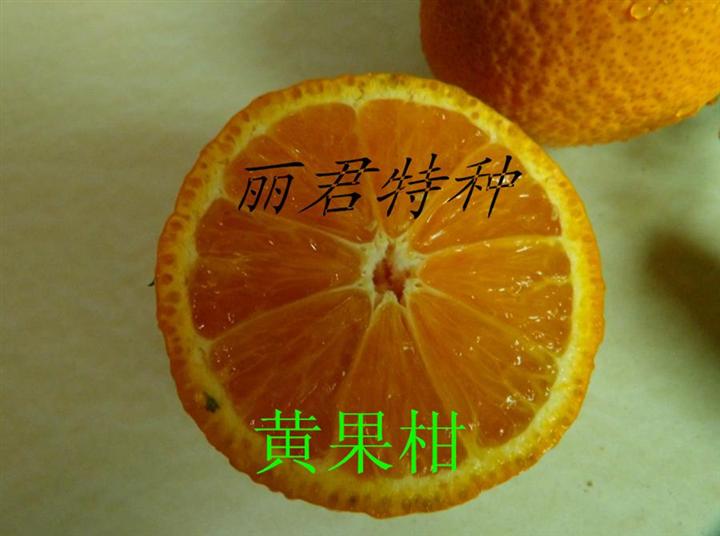 汉源晚熟黄果柑