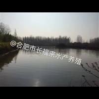 安徽�~苗�B殖基地