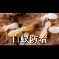 怎样防治白蚁-澄海白蚁站