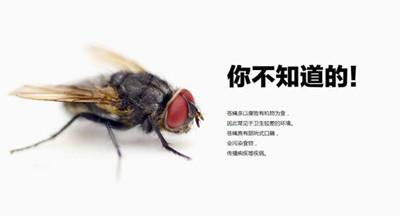 【汕头灭苍蝇,汕头专业灭苍蝇,汕头苍蝇防治】