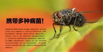 【汕头除苍蝇,汕头杀苍蝇,汕头专业灭苍蝇】