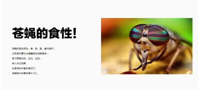 【汕头杀苍蝇,汕头专业灭苍蝇,汕头苍蝇防治】