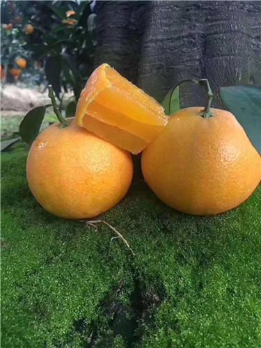四川柑橘苗★泽优果树繁殖基地