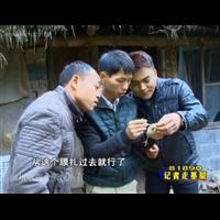 黑龙江发酵床养殖土鸡技术培训