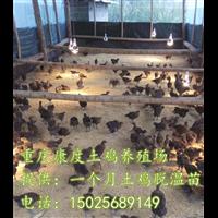 安徽发酵床鸡舍建造哪家强