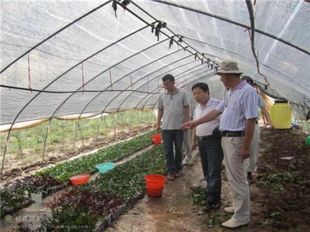 植物快繁技术教学-造型树-紫薇造型