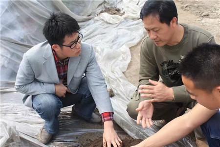植物造型教学&广东植物造型教学&各种造型树供应