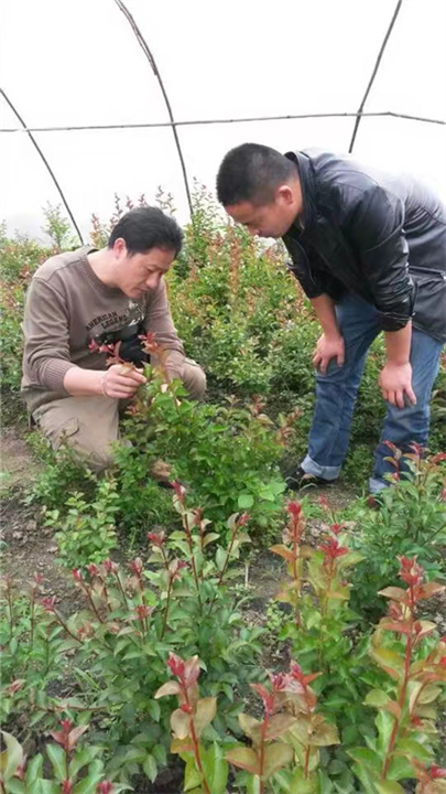 最新山野水果布福娜&江门各种造型树供应&造型树