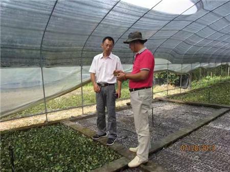 造型树&东莞各种造型树供应&最新山野水果布福娜