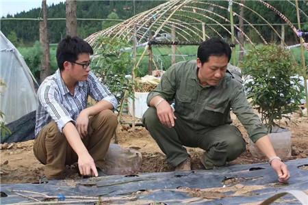 最新山野水果布福娜&东莞植物造型教学&植物快繁技术教学