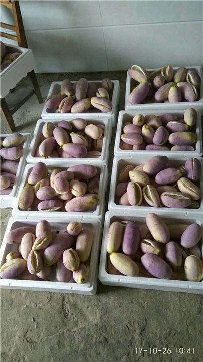 八月瓜―贺州植物造型教学―紫薇造型