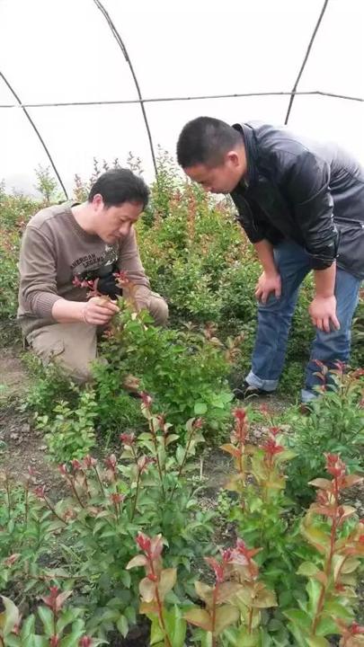 上海组培快繁技术@组培快繁技术@植物快繁