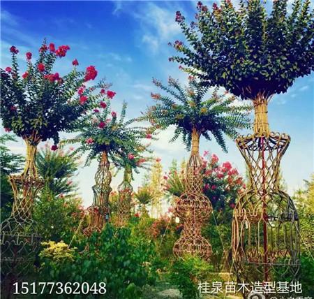 造型树【广西造型树】