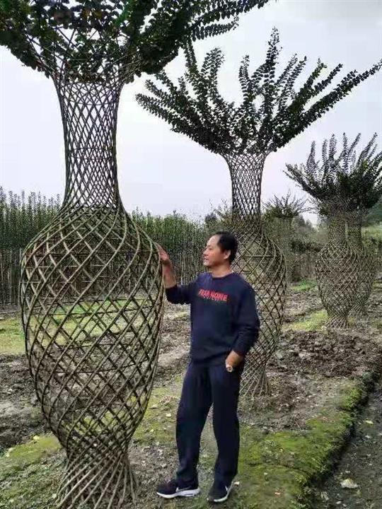 深圳造型紫薇树 深圳供应造型紫薇