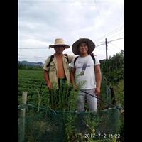 草莓种植技术培训基地