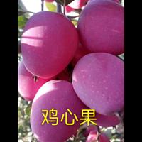黑龙江大鸡心果苗