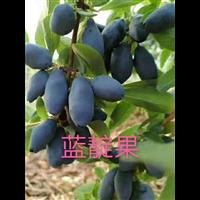 黑龙江蓝靛果苗