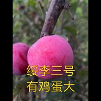 黑龙江绥李三号苗